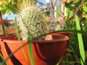 Советы по уходу за кактусом2