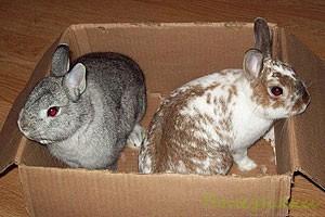 Картонные коробочки для кролика
