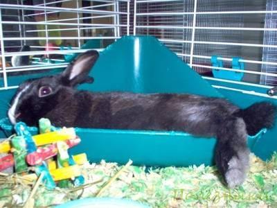 Натуральные материалы для кролика