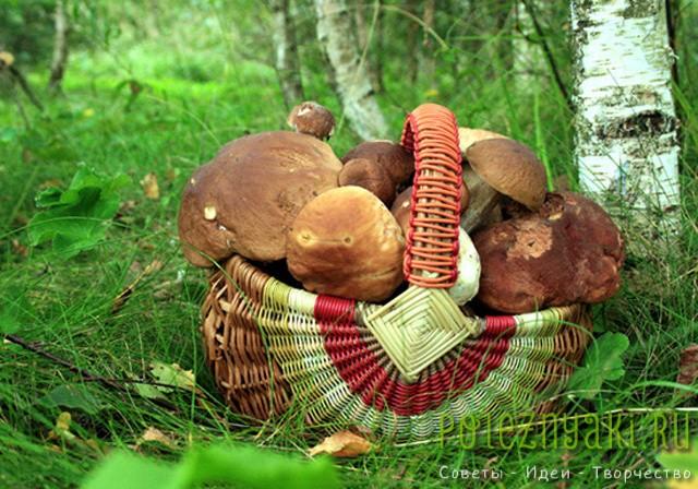 Памятка начинающим грибникам