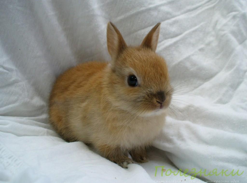 Ткани и лоскутки для кролика