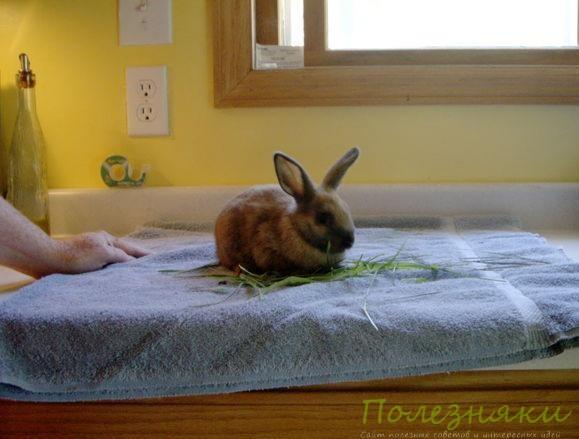 Высокие тумбы, полки, сооружения для кролика