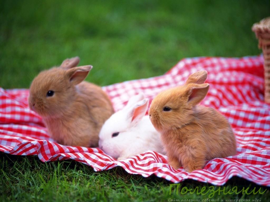 делаем игрушки для декоративных кроликов