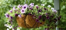 Как ухаживать за растениями в подвесной корзине?