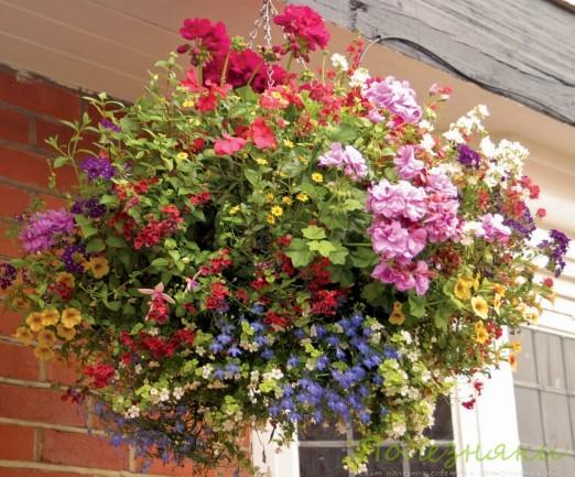 Цветы в подвесной корзине на улице
