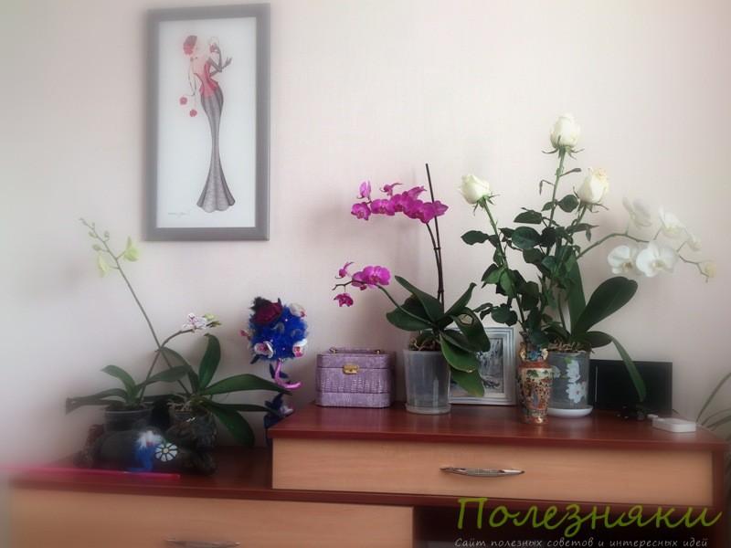 Орхидеи создадут в спальне очень благоприятную атмосферу