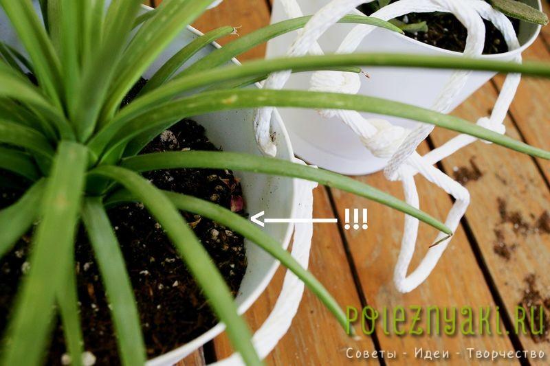 Как организовать в квартире подвесной сад - садим растения 2