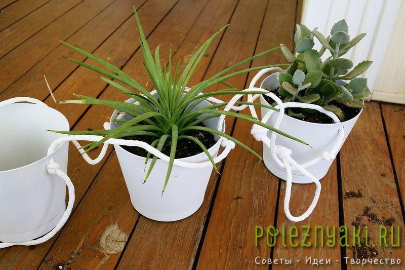 Как организовать в квартире подвесной сад - садим растения