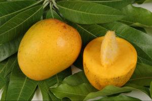 Вырастить манго