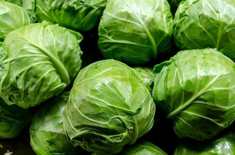Капуста-рекодсмен, лучшие сорта белокочанной капусты