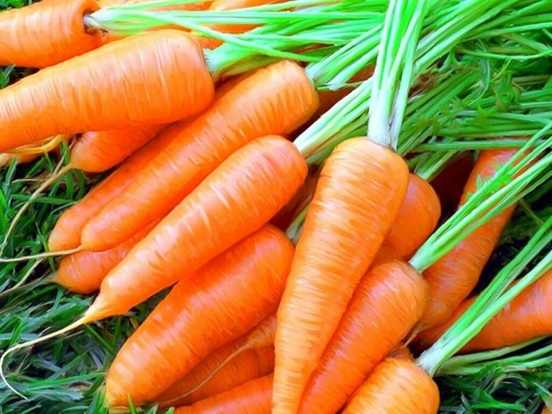 Действенные способы вырастить ровную и красивую морковку