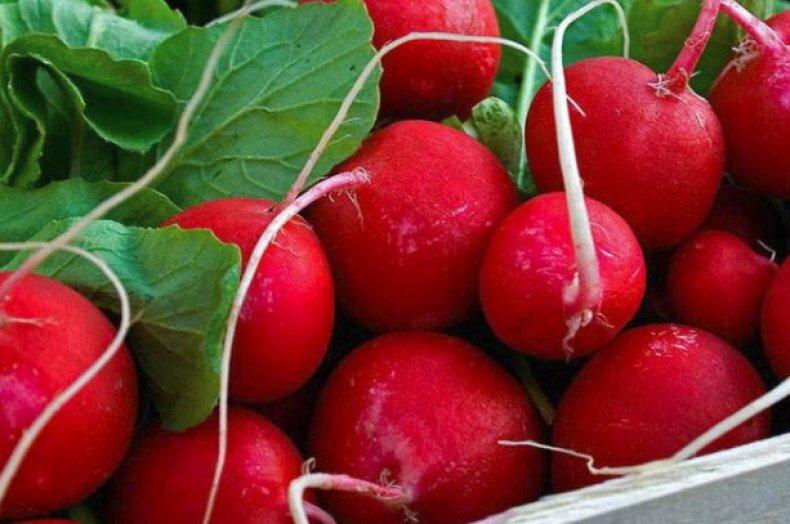 Сорта раннего, сладкого редиса, который можно кушать, когда ещё другие овощи не начали развиваться