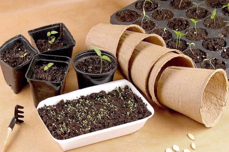 Как правильно подготовить семена овощей к посеву