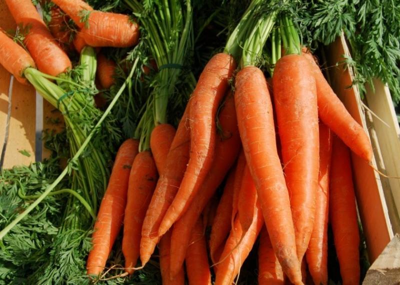 Сочные, сладкие сорта моркови - моя находка