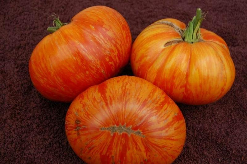7 сочных, сахарных, мясистых сортов томата, которые удивят любого