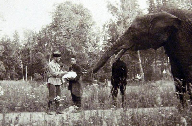 """""""Дареному слону в зубы не сморят"""": какие необычные подарки дарили русским правителям"""