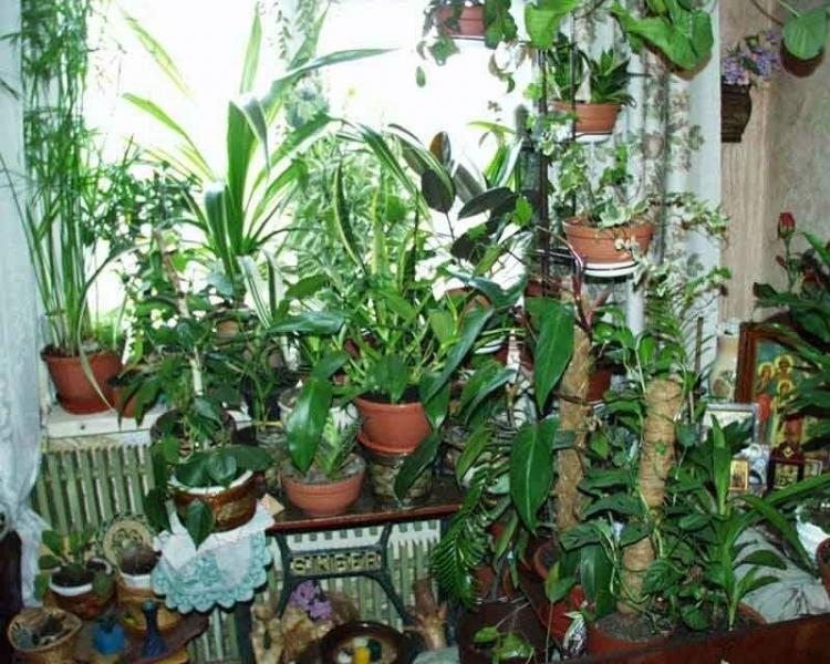 Почему многие отказываются иметь комнатные цветы в доме