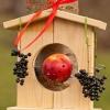Кормушки для птиц своими руками - 3 простых, но оригинальных проекта